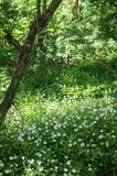 Escondrijo aislado acogedor del bosque del verano en la luz del sol de la mañana Imagen de archivo
