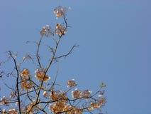 Escondrijo de la flor salvaje Imágenes de archivo libres de regalías