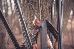 Escopetas de la caza que cuelgan en árbol con la presa después de la caza acertada del pato Foto de archivo libre de regalías