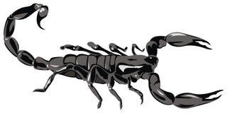 Escorpião ilustração do vetor