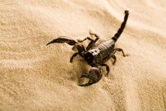 Escorpião na areia Imagens de Stock