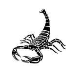 Escorpión blanco y negro agresivo para los tatuajes, muestra del zodiaco Fotografía de archivo libre de regalías
