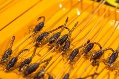 Escorpión frito Imagen de archivo libre de regalías