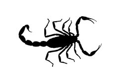 Escorpión negro del contorno aislado en el fondo blanco Ilustración Imagen de archivo libre de regalías