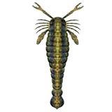 Escorpión siluriano de Pterygotus Imagen de archivo libre de regalías