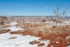 Escova e neve na garganta grande Imagem de Stock Royalty Free