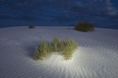 Escova em dunas de areia. Fotografia de Stock Royalty Free