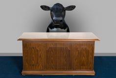 Escritório para negócios engraçado da vaca de leiteria ilustração do vetor
