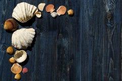 Escritorio de madera con las cáscaras del mar fotos de archivo