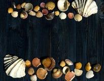 Escritorio de madera con las cáscaras del mar imagen de archivo libre de regalías