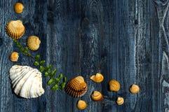 Escritorio de madera con las cáscaras del mar Fotografía de archivo