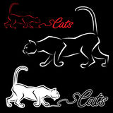 Escritura de la etiqueta del gato Fotos de archivo libres de regalías