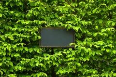 escritura de la etiqueta en fondo verde de la hoja con el lugar para su Imágenes de archivo libres de regalías