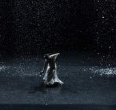 Escritura de los poemas en una noche nevosa 4-Act 1: Hay otro brote fotos de archivo libres de regalías
