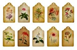 Escrituras de la etiqueta de la flor del vintage Imagen de archivo libre de regalías