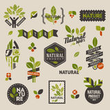 Escrituras de la etiqueta e insignias de la naturaleza con las hojas verdes Imagen de archivo