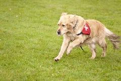 Escuadrilla del perro del rescate Fotografía de archivo libre de regalías