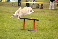 Escuadrilla del perro del rescate Fotos de archivo libres de regalías