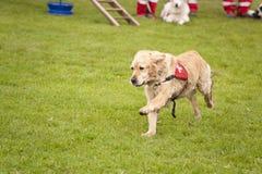 Escuadrilla del perro del rescate Imagenes de archivo