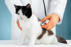 Escuchando un gato con el estetoscopio fotografía de archivo libre de regalías