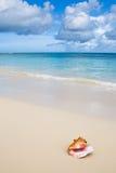 Escudo bege na praia branca da areia perto do oceano azul Fotos de Stock Royalty Free