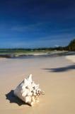 Escudo branco grande em uma areia Fotografia de Stock Royalty Free