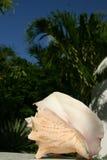 Escudo com palmtree imagens de stock
