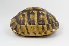 Escudo da tartaruga Imagens de Stock