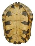 Escudo da tartaruga imagem de stock royalty free