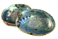 Escudo de Paua Imagens de Stock