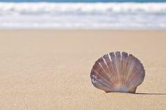 Escudo de Scallop na areia. Fotografia de Stock