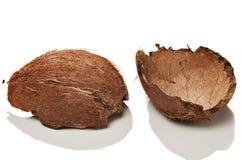 Escudo de um Coco Fotos de Stock