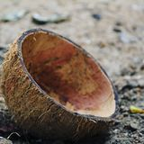 Escudo do coco Fotografia de Stock Royalty Free