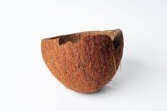 Escudo do coco Imagem de Stock