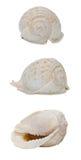 Escudo do Conch Imagens de Stock Royalty Free