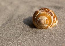 Escudo do Conch Fotografia de Stock Royalty Free