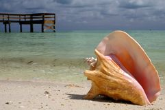 Escudo do Conch Fotografia de Stock Royalty Free