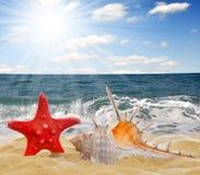 Escudo do Conch com starfish imagens de stock
