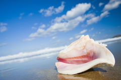 Escudo do Conch da rainha foto de stock royalty free