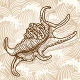 Escudo do mar Fotos de Stock Royalty Free