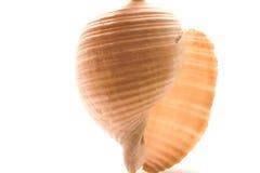 Escudo do mar Fotografia de Stock Royalty Free