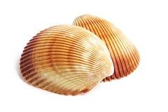 Escudo do mar Imagem de Stock Royalty Free