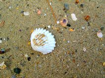 Escudo 1 do mar Imagem de Stock