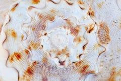 Escudo do mar fotos de stock