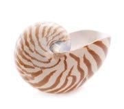 Escudo do mar do pompilius do nautilus no branco Fotografia de Stock Royalty Free