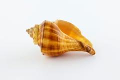 Escudo do mar em um fundo branco Imagem de Stock Royalty Free
