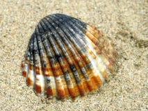 Escudo do mar na areia imagens de stock