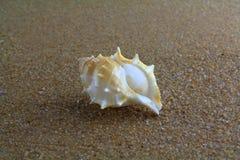 Escudo do mar na areia Foto de Stock