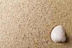 Shell na areia fotografia de stock royalty free