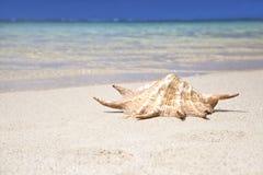 Mar Shell Foto de Stock